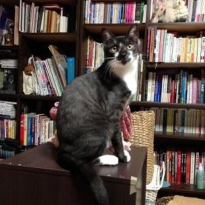 本棚とレオ.JPG